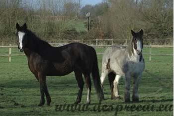 Calul si prietenia_03