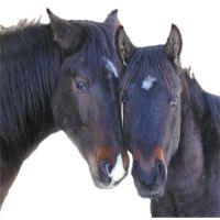 Calul și prietenia