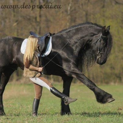 intelege-ti calul_01