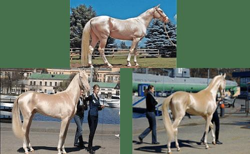 cel mai frumos cal din lume