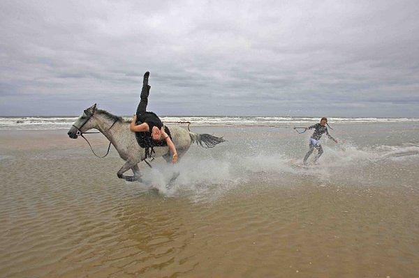 horse surfing_01
