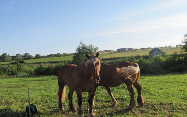 Pasiune pentru cai_05