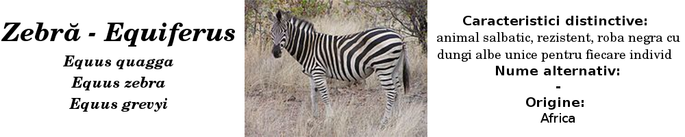 zebra_title