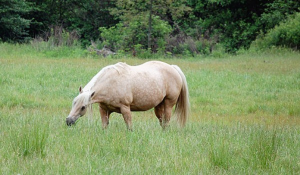 cai si obezitate