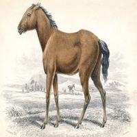 Tarpanii - caii sălbatici europeni
