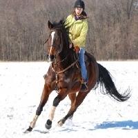 Îngrijirea cailor pe timp de iarna - Caii și mișcarea