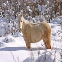 Îngrijirea cailor pe timp de iarna - Alimentație
