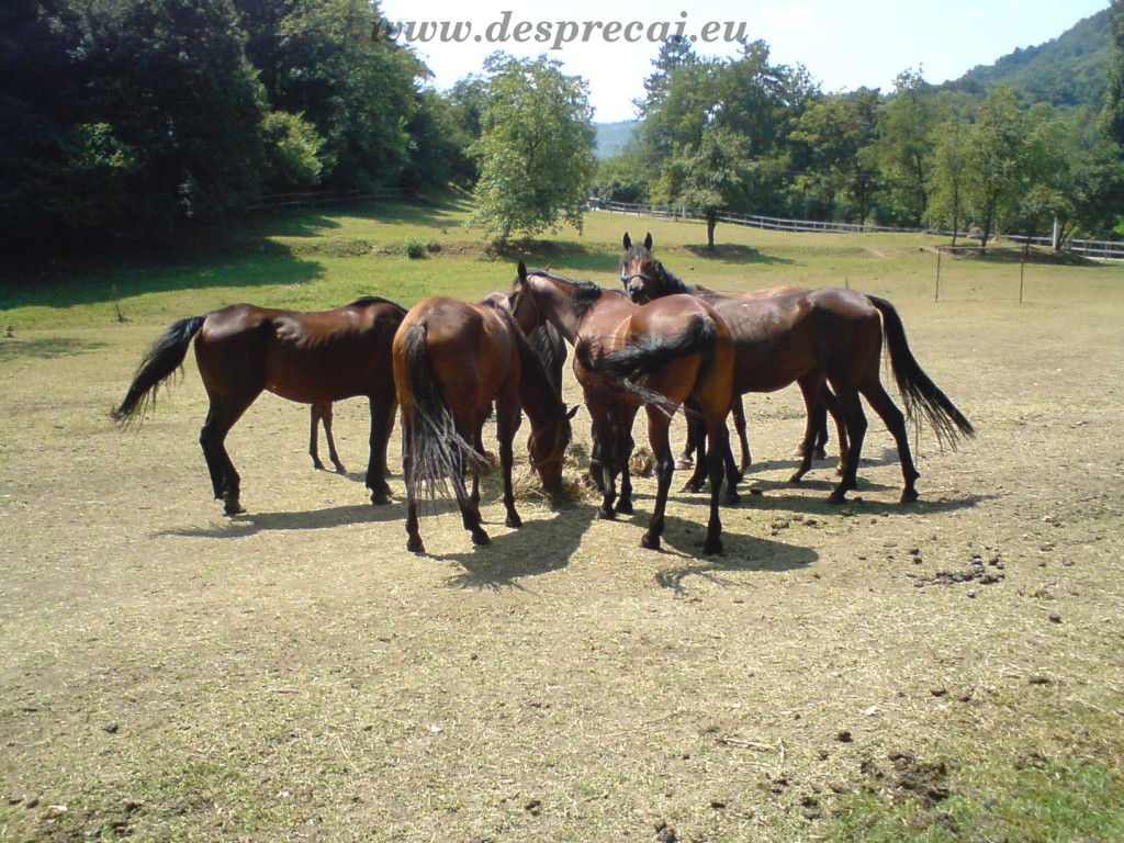 caii si bunele maniere_02