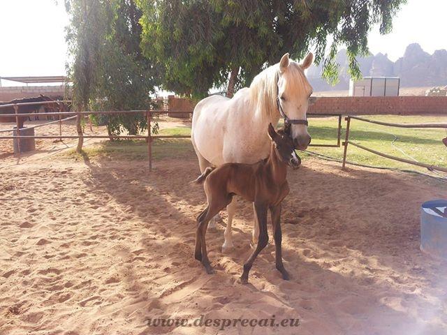 caii si bunele maniere_03